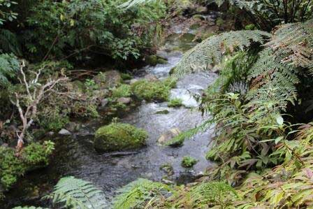 New Plymouth Sights-3